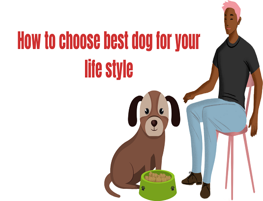 How to choose best dog for your life style