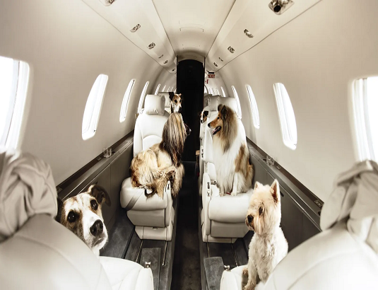 Travelling with pet via Air